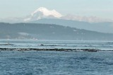 New Documentary About Fidalgo Bay Cleanup