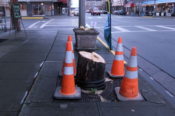Downtown Trees Will Be Replaced