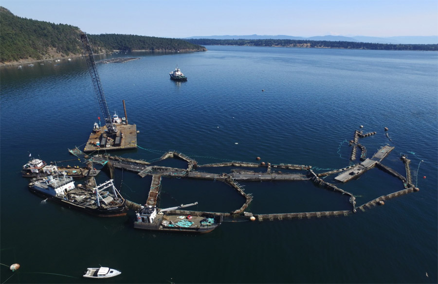 DNR drone image of Cypress Island net pen #2, August 28, 2017. Image from Dept. of Natural Resources.